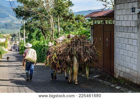 San Miguel Duenas, Guatemala - October 10, 2017: Farm Workers Walk With Horse Laden With Maize In Vi