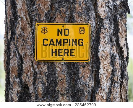 Unites States Forest Service No Camping Sign Nailed To A Pine Tree In The Kaibab National Forest.