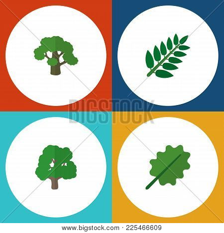 Icon Flat Bio Set Of Leaves, Oak, Park And Other  Objects. Also Includes Leaf, Tree, Oak Elements.
