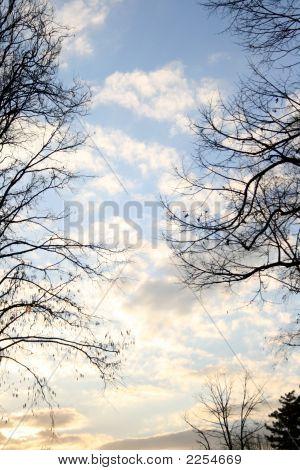 Sky Through A Trees