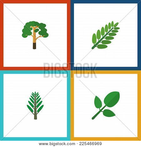 Icon Flat Bio Set Of Acacia Leaf, Forest, Hickory And Other  Objects. Also Includes Leaf, Tree, Fore