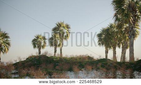 3d render of the palmetto tree on terrain landscape