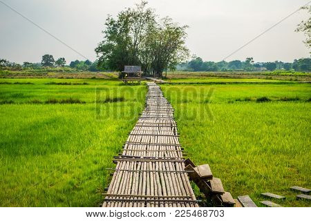 Old Bamboo Bridge With The Rural Green Rice Field Background At Phu Kareang, Nakhon Nayok Province,