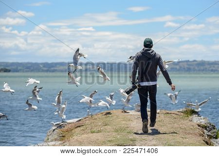 Young Male Photographer Chasing Group Of Seagull Birds Near Lake Rotorua In North Island Of New Zeal