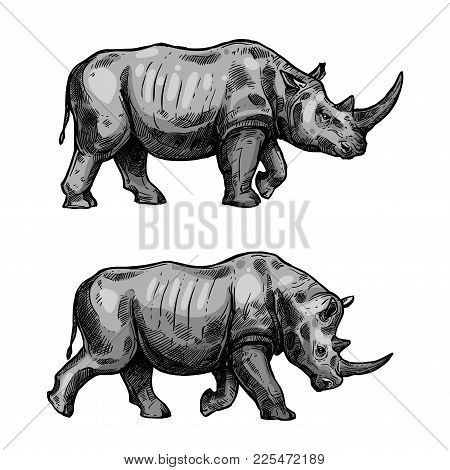 Rhino Walking Sketch Of African Mammal Animal. Wild Rhinoceros Attacking With Bended Head Isolated I