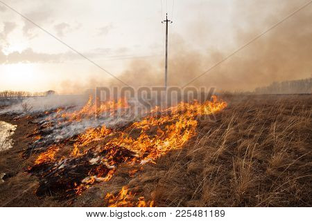 A Terrible Fire Destroys The Field. The Flame Burns The Spring Grass.