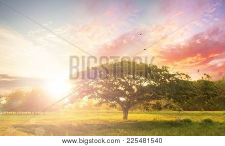 Nature Background Concept: Alone Tree On Meadow Sunset