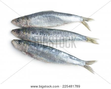 Raw sardines fish isolated on white background.