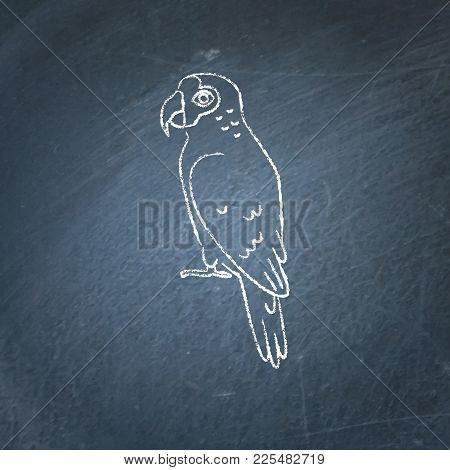 Amazon Parrot Icon Sketch On Chalkboard. Exotic Tropical Bird Symbol Drawing On Blackboard.