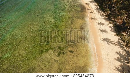 Beautiful Tropical Sand Beach, Palm Trees. Aerial View Of Tropical Beach On The Island Siargao, Phil
