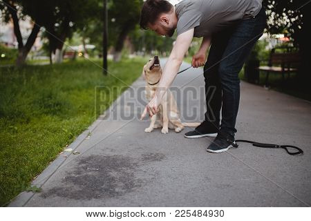 Man Disaccustoms Labrador Dog From Coping Need Urine On Asphalt In Park. Concept Training By Cynolog