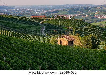 Small rural house among green vineyards of Barolo in Piedmont, Northern Italy.