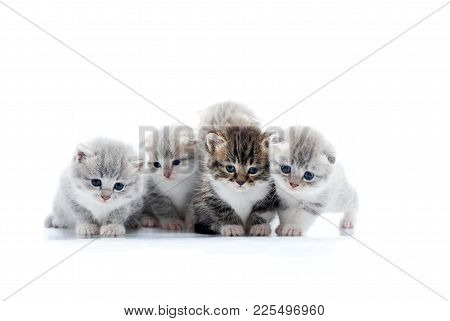 Four Small Cute Grey Kittens And One Dark Brown Kitten Are Posing In White Photo Studio Being Anxiou