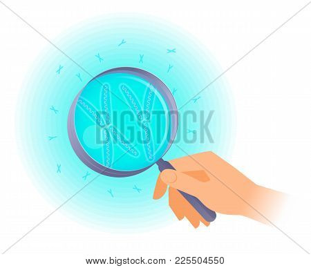The Scientist Holds A Magnifier And Researches X, Y Chromosome. Flat Vector Illustration Of Hand Hol