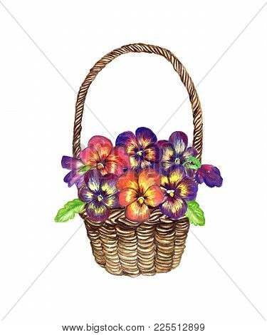 A Variety Of Spring Pansies In A Wicker Basket, The Design For A Card, Isolated Hand Painted Waterco