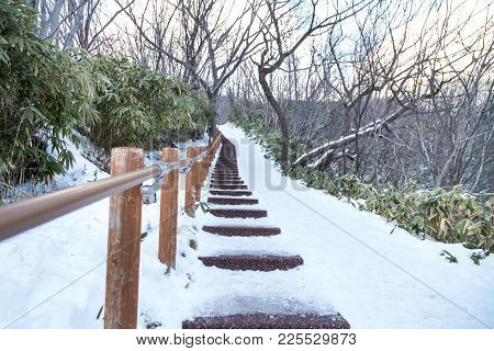 Walking Trail At Jigokudani Or Hell Valley, During Winter