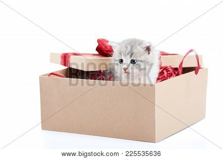 Little Grey Fluffy Cute Kitten Sitting Inside Cardboard Box With Red Birthday Box On Top Being Prese