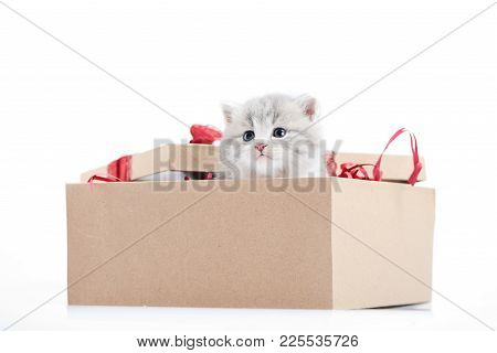 Special Present. Little Adorable Fluffy Kitten Looking Out Of Decorated Cardboard Box Being Present