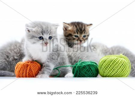Small Grey Fluffy Adorable Kitten Is Playing With Orange Yarn Ball While Other Kitties Are Playing W