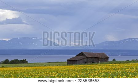 Fields Of Dandelion In The Landscape. Clouds, Lake And Mountains In The Background.