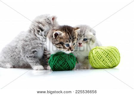 Grey Fluffy Cute Kitties And One Brown Striped Adorable Kitten Are Playing With Green Yarn Balls In