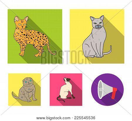 Siamese And Other Species. Cat Breeds Set Collection Icons In Flat Style Vector Symbol Stock Illustr