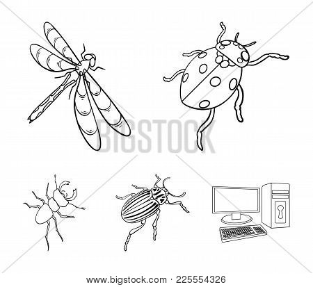 Arthropods Insect Ladybird, Dragonfly, Beetle, Colorado Beetle Insects Set Collection Icons In Outli