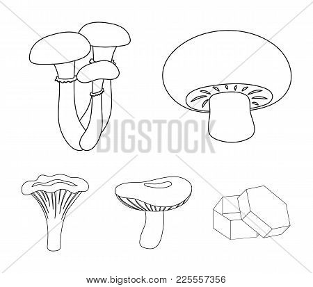 Champignon, Honey, Agarics, Russula, Chanterelle. Set Collection Icons In Outline Style Vector Symbo