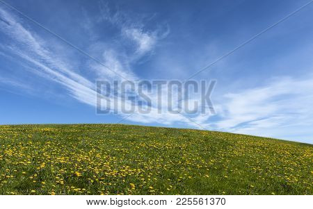 Hilly Meadows And Blue Sky. Grass And Dandelions This Side The Open Sky.