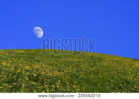 Hilly Meadows And Blue Sky. Grass And Dandelions This Side The Open Sky. Moon.