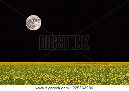 Black Night Behind The Moon. Fields Of Dandelions In Bright Sunshine.