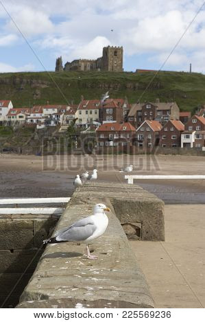 Seagull Sat On Wall With Whitby Old Town And Saint Marys Church In Background