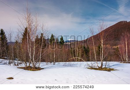 Beautiful Scenery With Birch Trees On Snowy Slope. Lovely Mountainous Landscape With Snowy Peak In T