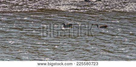 River Landscape With Glary On The Water And Two Egyptian Geese.