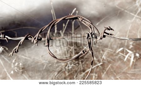 A Twisted Strand Of Rusted Barbed Wire Against A Blurred Background