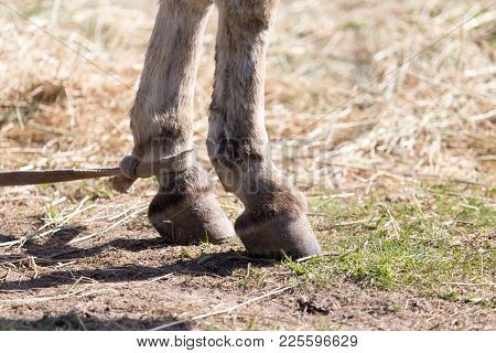 The Horse's Hooves On The Nature