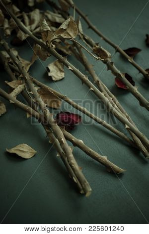 Few plucked rose petals scattered along with stems of rose flower bouquet. Close up of thorns on rose stems and petals.