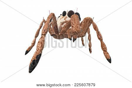 Brown Arachnid Seen From Its Right Side