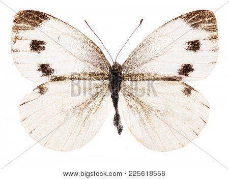 Small white (Pieris rapae) butterfly isolated on pure white background