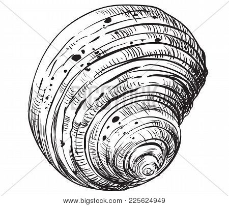 Hand Drawing Seashell. Vector Monochrome Illustration Of Swirl Seashell Isolated On White Background
