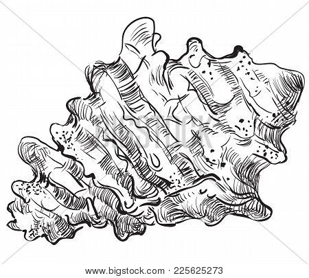 Hand Drawing Seashell. Vector Illustration In Black Color Of Seashell (conch Shell) Isolated On Whit