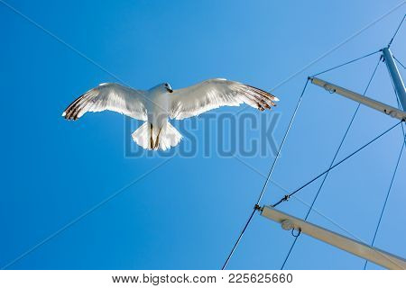Close Up From Below Of Seagull Bird Flying In The Clear Sky With Blured Partial Ship Mast And Riggin
