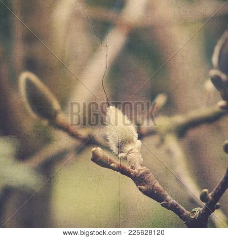 Beautiful Natural Willow Little Willow Twig With Catkins