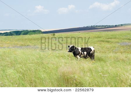 Steppe Landscape With A Cow