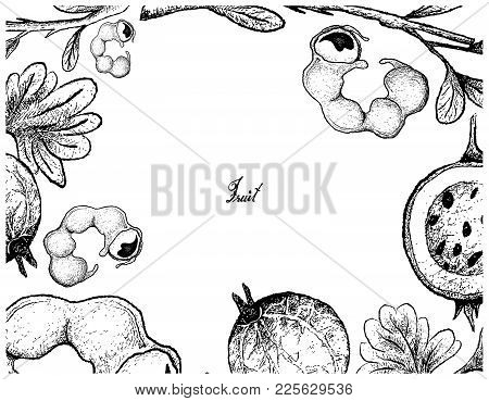 Fruits, Illustration Of Hand Drawn Sketch Frame Of Manila Tamarind And Gooseberry Isolated On White