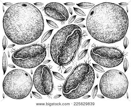 Kiwano, Kawani, Horned Melon, Cucumber, African, Melano, Cucumis Metuliferus, Jelly, Hedged Gourd, C