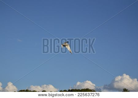 A Bird Flies Above The Trees, Over The Field, Over The River In Summer
