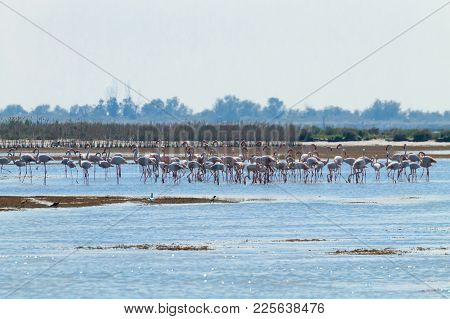 Flock Of Pink Flamingos From