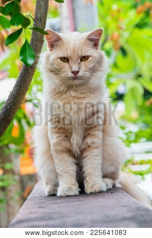 Cat , Lovely Animal And Pet In The Garden