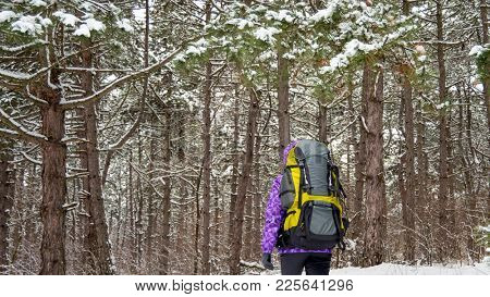 Woman Hiking with Big Backpack in the Beautiful Winter Forest